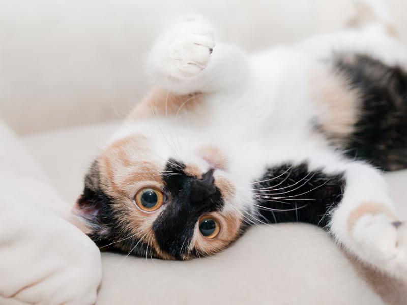 Alarme maison quand on a un chat : nos conseils de pros